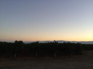 Sunrise over the vineyard in Lake County