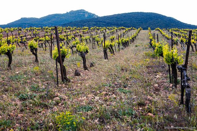 Le Conte des Floris, Languedoc, France